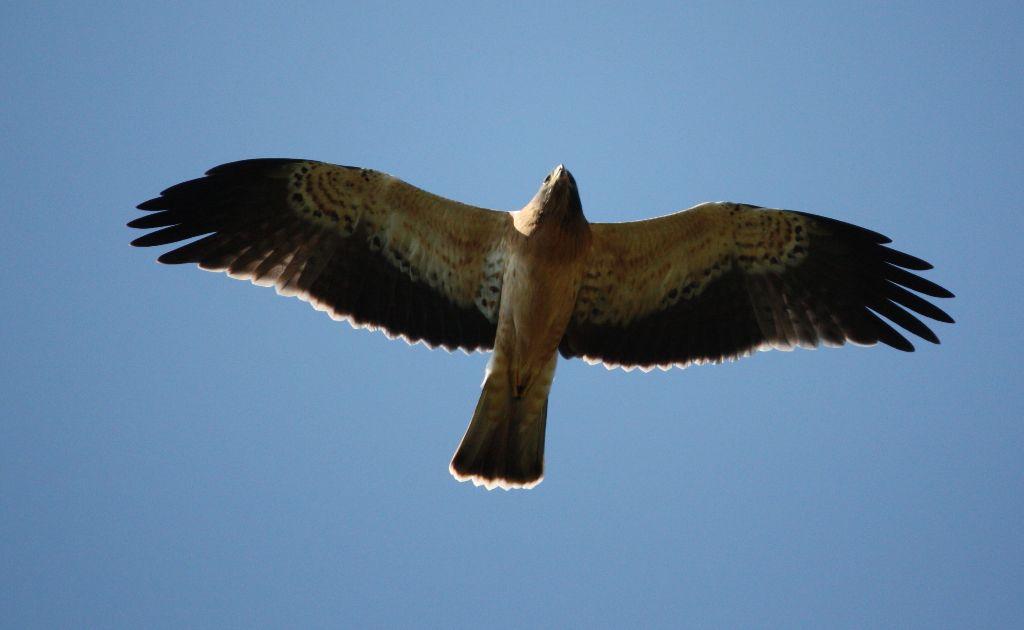 Birds of prey in Spain