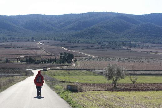 Foodie Experiences in Spain